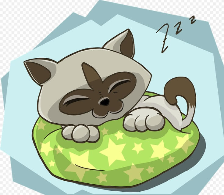 El gato cansado